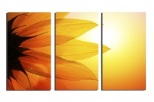 Yellow-sunflower